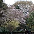 0323新宿御苑28.jpg