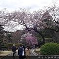 0323新宿御苑29.jpg
