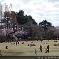 0323新宿御苑34.jpg
