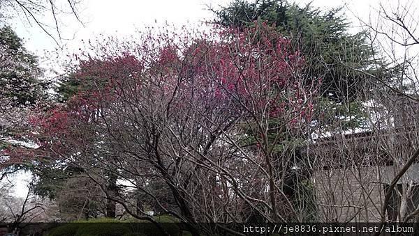 0323新宿御苑38.jpg