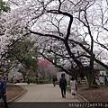 0323新宿御苑37.jpg