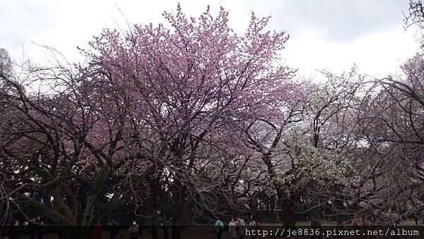 0323新宿御苑42.jpg