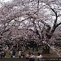 0323新宿御苑41.jpg