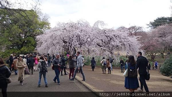 0323新宿御苑44.jpg