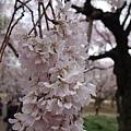 0323新宿御苑46.jpg