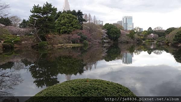 0323新宿御苑48.jpg