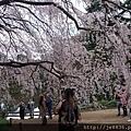 0323新宿御苑50.jpg