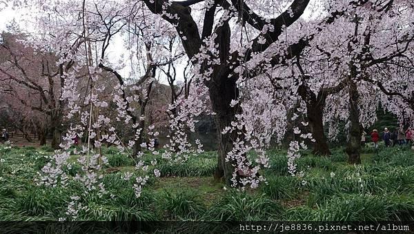 0323新宿御苑53.jpg