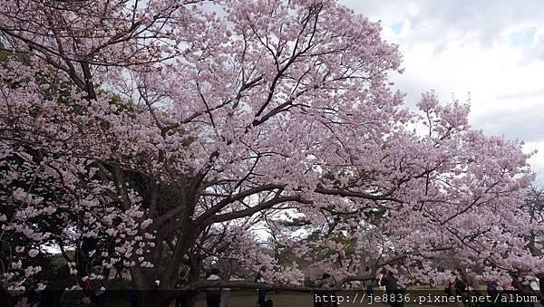 0323新宿御苑56.jpg
