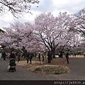 0323新宿御苑55.jpg