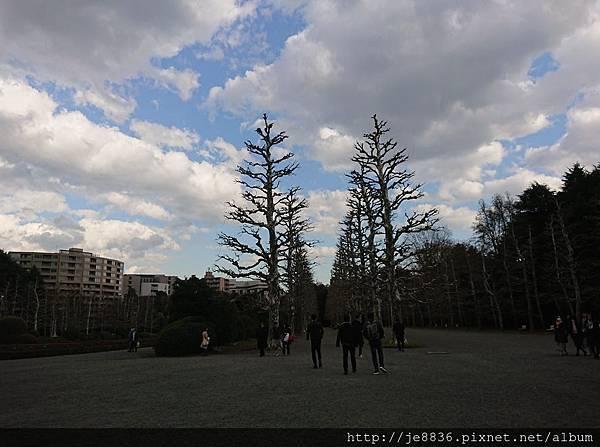 0323新宿御苑59.jpg