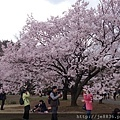 0323新宿御苑57.jpg