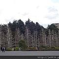 0323新宿御苑60.jpg