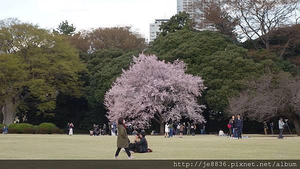 0323新宿御苑64.jpg