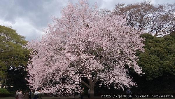 0323新宿御苑65.jpg