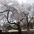 0323新宿御苑67.jpg