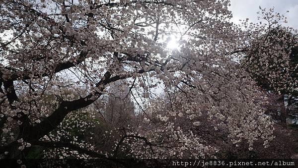 0323新宿御苑68.jpg