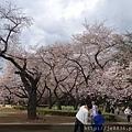 0323新宿御苑69.jpg
