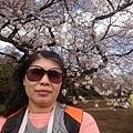 0323新宿御苑78.jpg