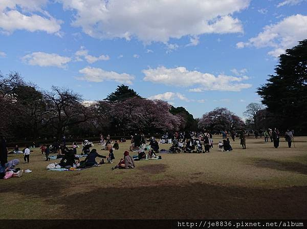 0323新宿御苑79.jpg