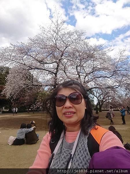 0323新宿御苑85.jpg