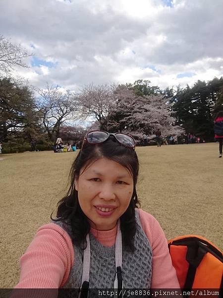0323新宿御苑89.jpg