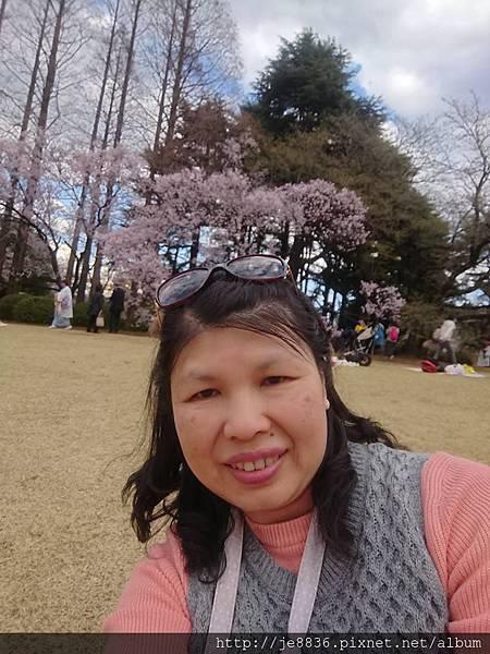 0323新宿御苑90.jpg