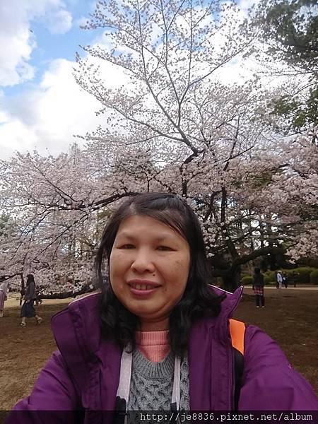 0323新宿御苑94.jpg