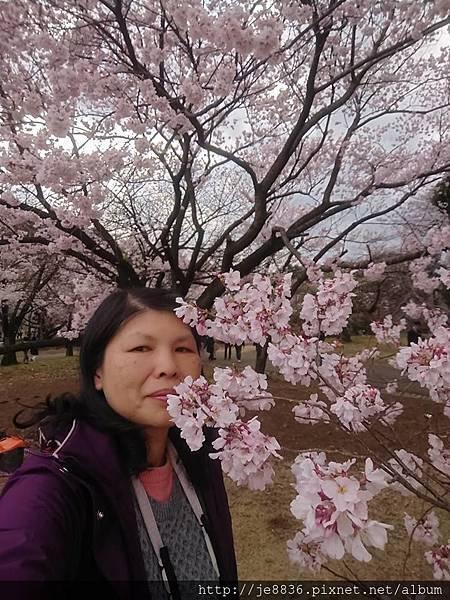 0323新宿御苑100.jpg