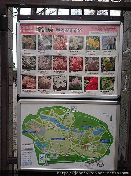 0323新宿御苑102.jpg