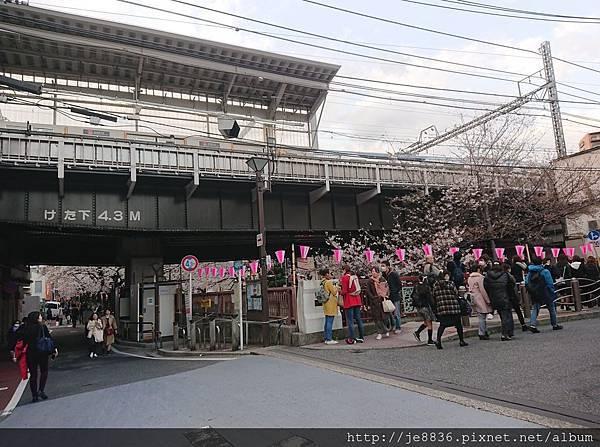 0323目黑川賞櫻5.jpg