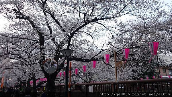 0323目黑川賞櫻6.jpg