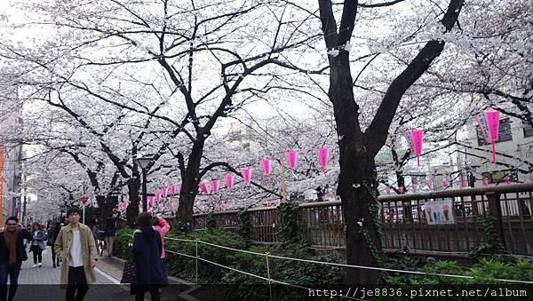 0323目黑川賞櫻7.jpg