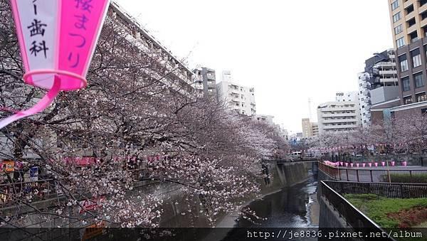 0323目黑川賞櫻9.jpg
