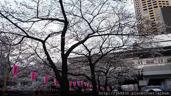 0323目黑川賞櫻12.jpg