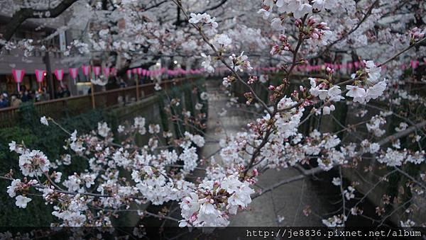 0323目黑川賞櫻15.jpg