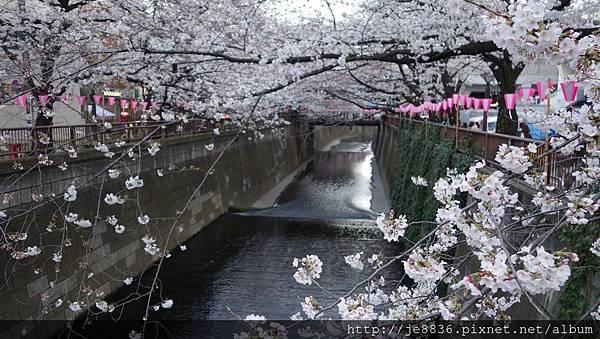 0323目黑川賞櫻18.jpg