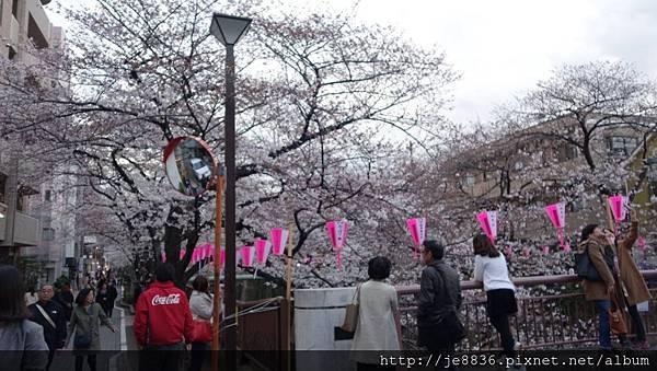 0323目黑川賞櫻20.jpg