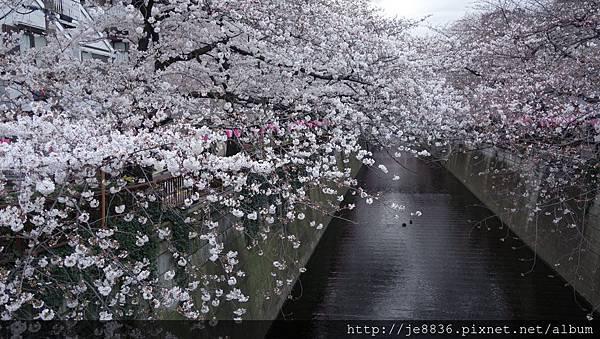 0323目黑川賞櫻27.jpg