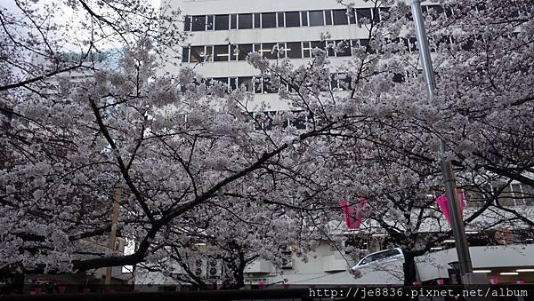 0323目黑川賞櫻30.jpg