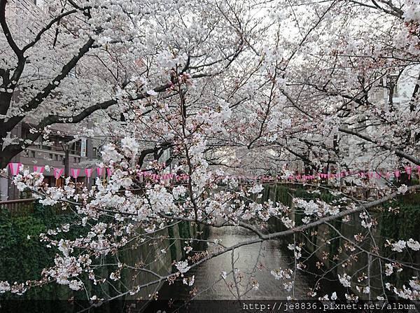 0323目黑川賞櫻34.jpg