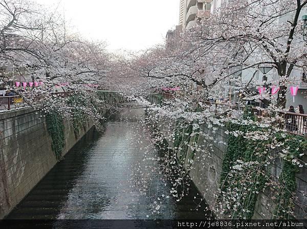 0323目黑川賞櫻37.jpg
