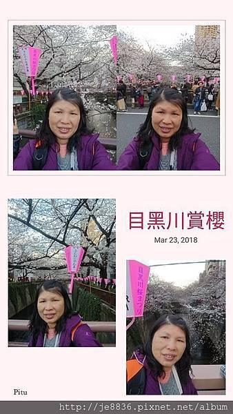 0323目黑川賞櫻1.jpg