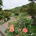 0508蘿莎玫瑰2.jpg