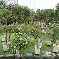0508蘿莎玫瑰5.jpg