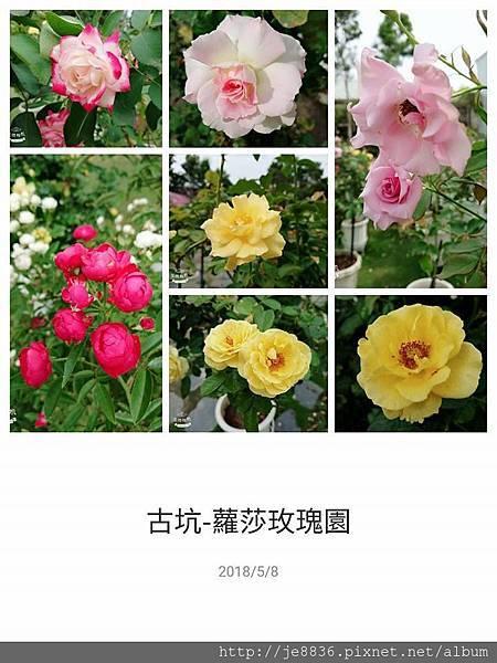 0508蘿莎玫瑰13.jpg