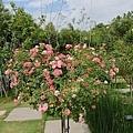 0508蘿莎玫瑰20.jpg