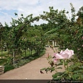 0508蘿莎玫瑰25.jpg