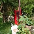 0508蘿莎玫瑰26.jpg