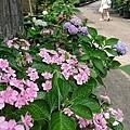 0513關西花鳥園 (6).jpg